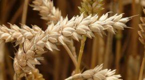 Getreidereiniger: Worauf sollte man achten?